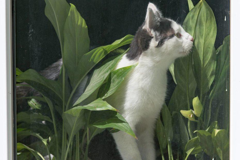 rosliny-przyjazne-dla-kota